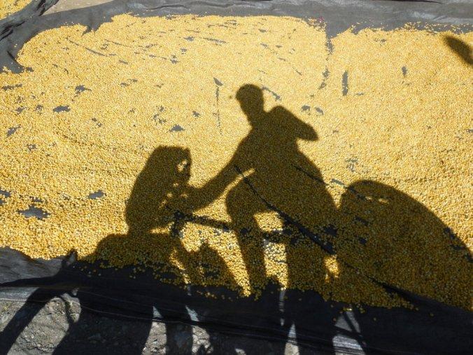 Dave the corn man