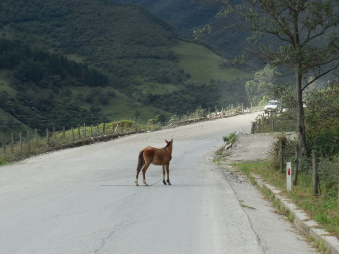 Horse lost on road