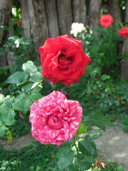 Hostal garden 2