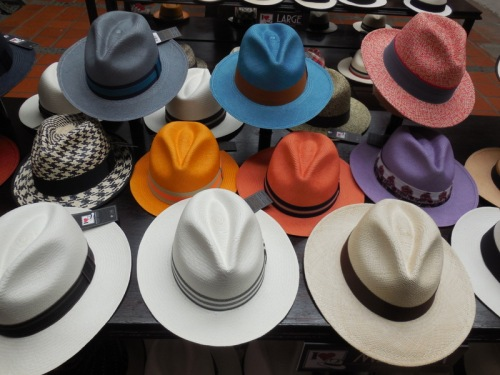 Panama hats - in colors