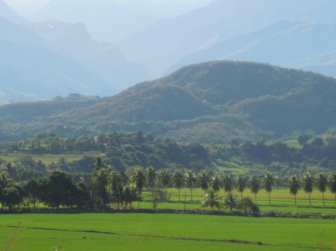 Utcubamba River rice fields 8