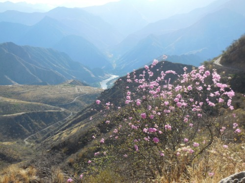 Andes view with flower 2