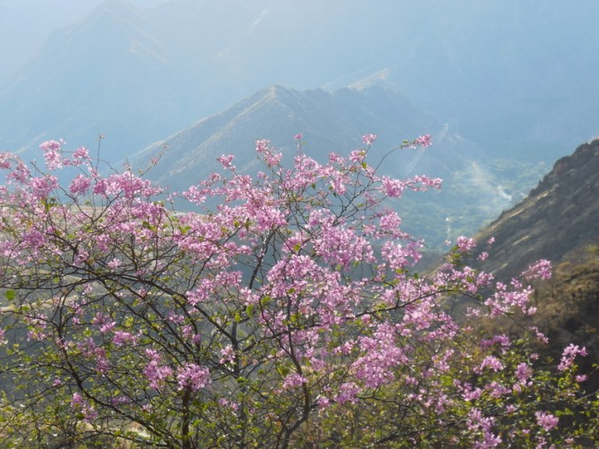 Andes view with flower