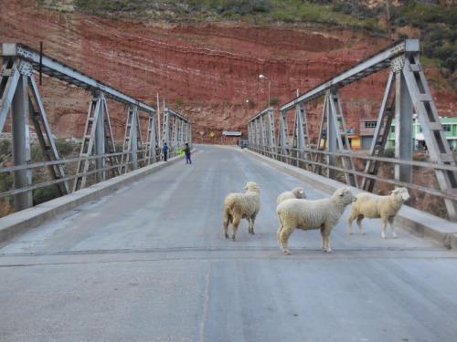 Bridge in IIzcuchaca with sheep