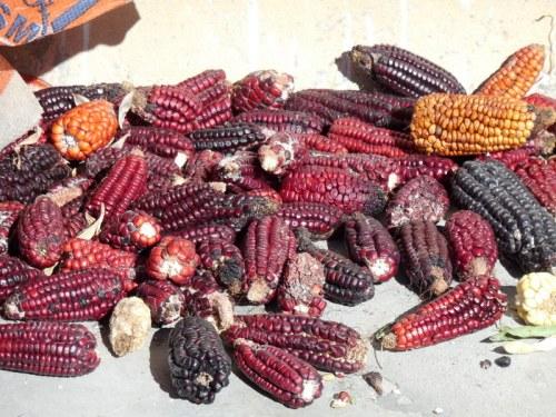 Corn drying 1