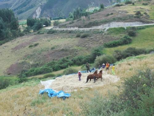 Horses doing