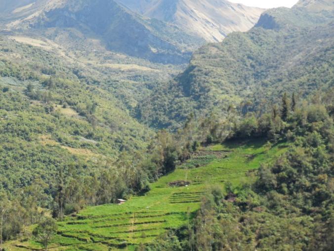 Andes farm 1