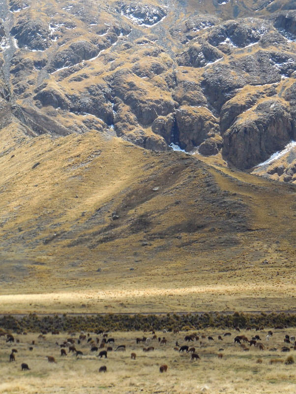 Andes view with alpaca