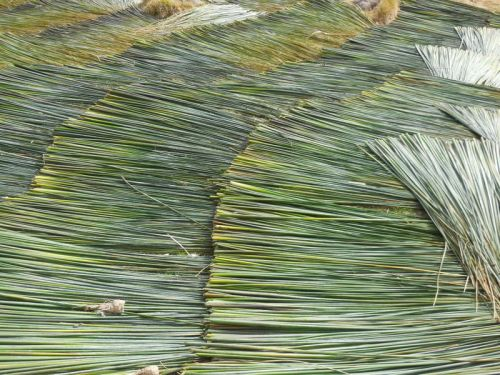 Cut reeds on the shore of Lake Titicaca 3