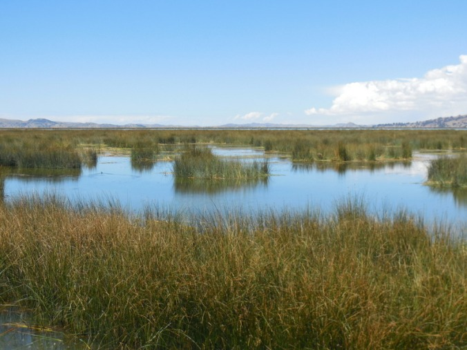 Reeds water view 2