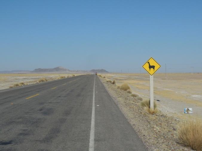 Alpaca warning sign 1
