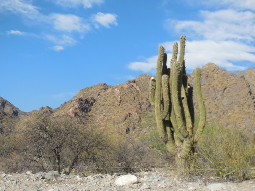 Cacti 1 (2)