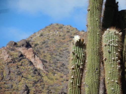 Cacti 3