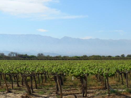Cafayate vinews 4