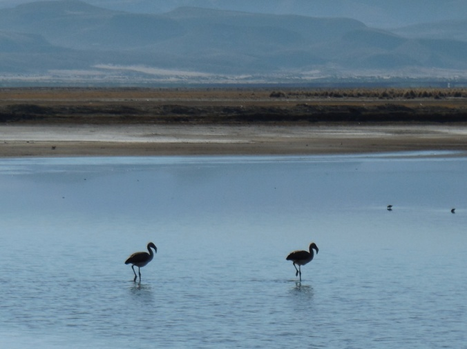 Flamingos 1