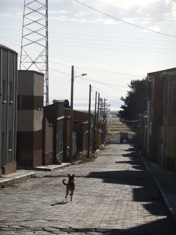 Huari street with dog