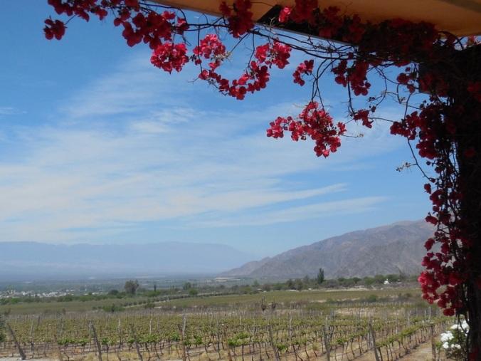 Piattelli vinyards 2