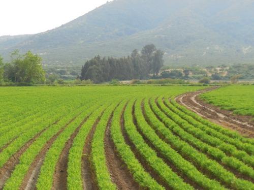 Crops 1