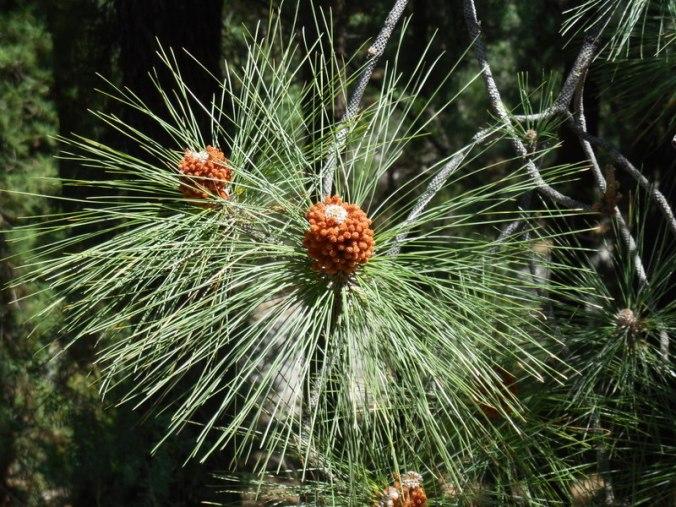 Mendoza plants 1