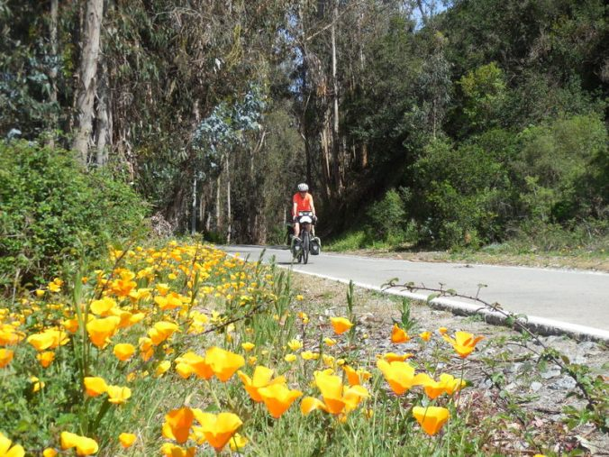 Nancy and the poppies 3
