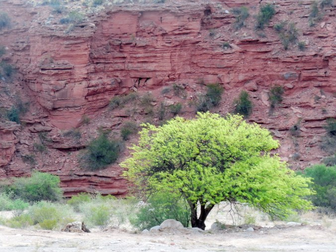 spring tree and red rocks