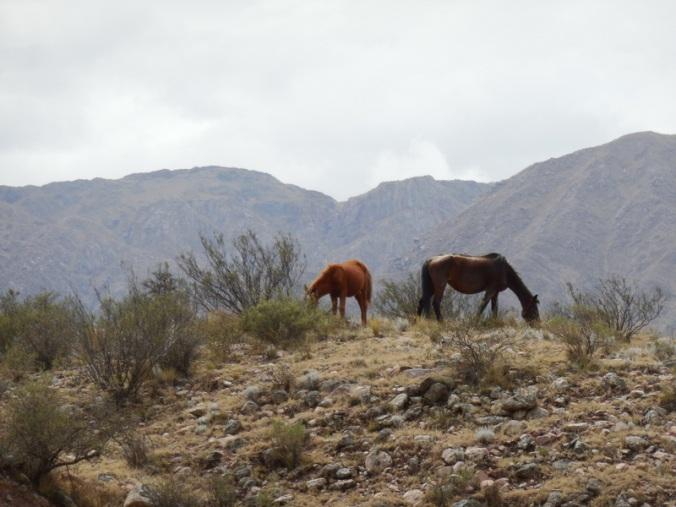 Summit horses
