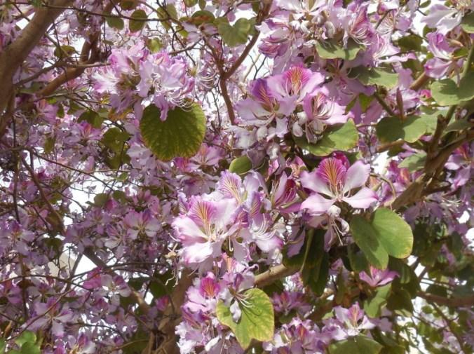 Unknown flowering tree 3