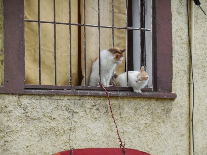 Valparaiso cats