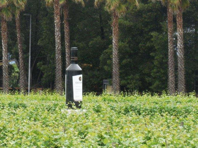 Wine in vine