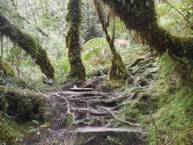 Cascades walk 2