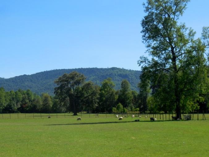 Chilean fields 2