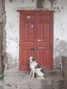 Door of the day18
