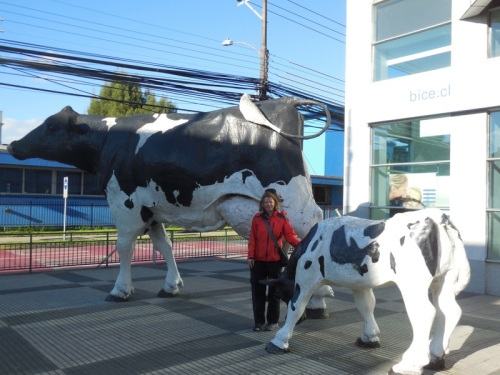Nancy in Osorno - farm and dairy country
