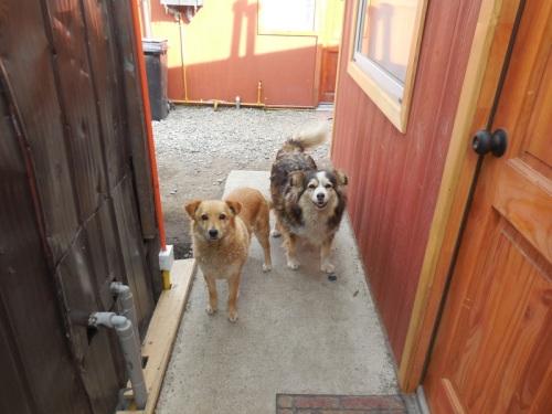 Cabana dogs