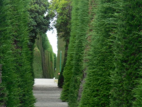 Cemetery trees 3