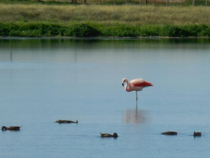 Pink flamingos 10