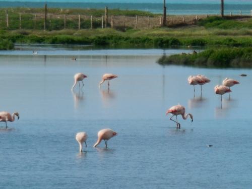 Pink flamingos 11