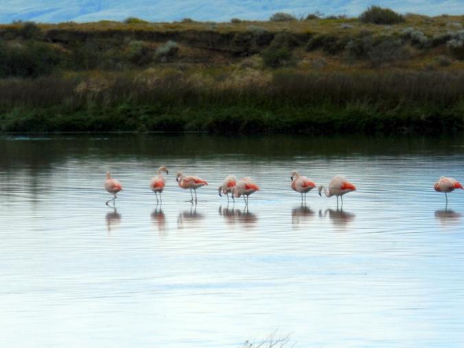 Pink flamingos 4