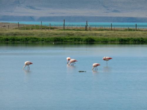 Pink flamingos 5