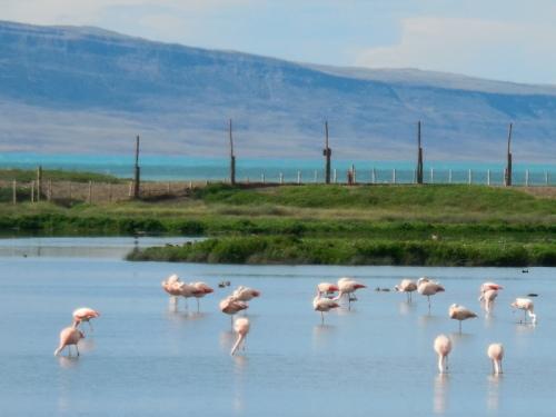 Pink flamingos 6