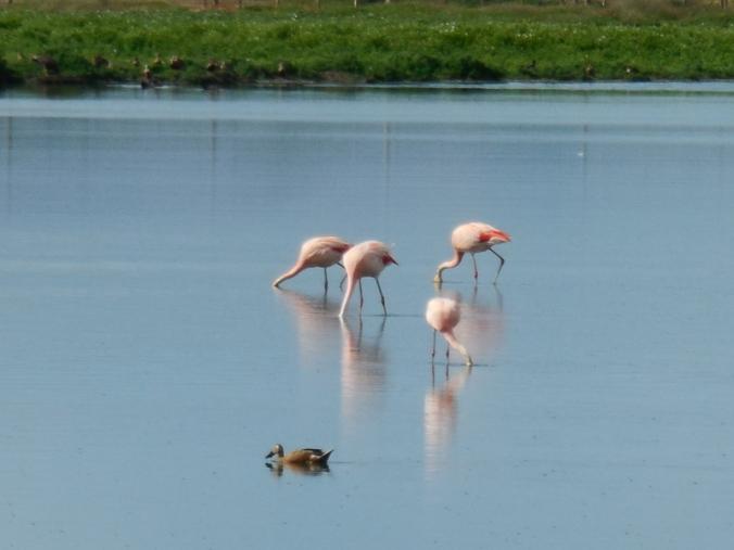 Pink flamingos 7