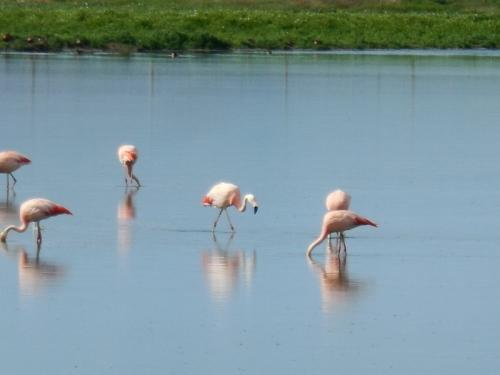 Pink flamingos 8