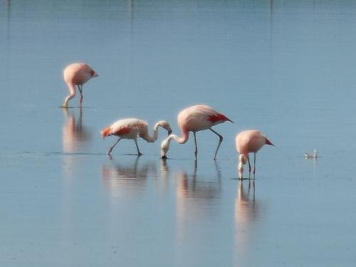 Pink flamingos 9