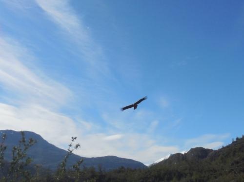 Condor 6 (2)