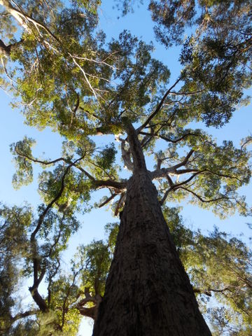 Tree top walk - red tindle 4