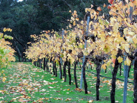 Clare Valley wines 4