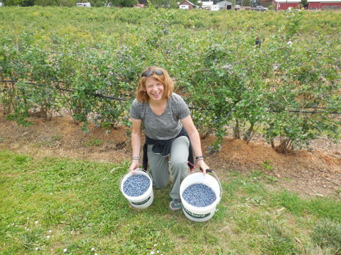Blueberries picking champion