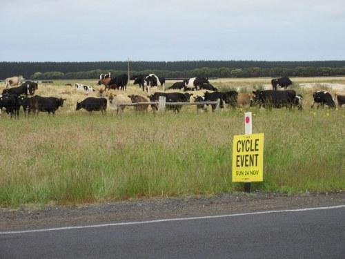 Bike cow event 1