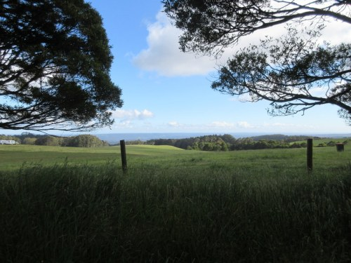 Otway Ranges in the morning 1