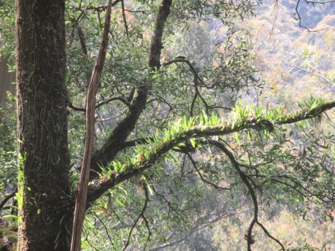 Turton's Track trees 1